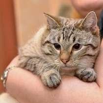 Гордость любого дивана! Добрый молодой домашний котик Тиша, в г.Москва