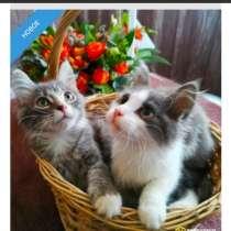 Ищем ручки для очаровательных котят?, в г.Москва