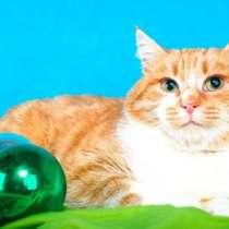 Отдам даром Ласковый, уютный молодой котик Бублик, в г.Москва