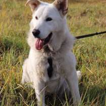 Ваш лучший друг и охранник, молодой пес Завгар в добрые руки, в г.Санкт-Петербург