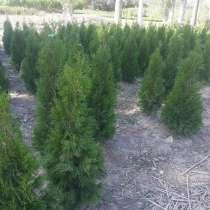 Продаю елки, в г.Бишкек