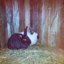 Продам кроликов, в г.Гродно