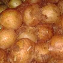 Купим лук,огурцы, томаты, картофель урожай 2019г Объемы от 2, в Брянске