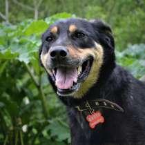Яркая, дружелюбная, игривая собака, в Санкт-Петербурге