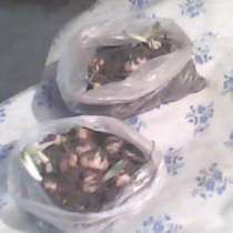 Продам луковицы белой лилии, в г.Рубежное