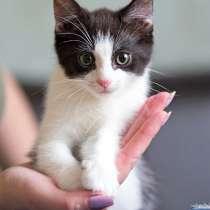 Крошки-котята от домашней кошки в добрые руки, в г.Москва