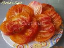 Семена томатов 300 сортов от коллекционера, в Пятигорске
