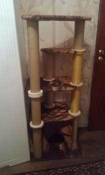 Иговой комплекс для кошки, в Москве