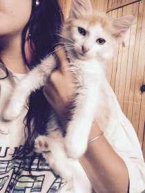 Котята в дар, в г.Минск