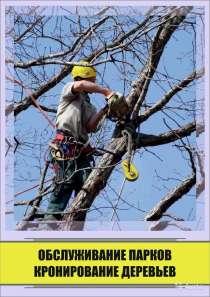 Удаление деревьев любой сложности, в Воронеже
