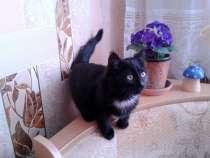 Отдам котеночка, в г.Усть-Каменогорск