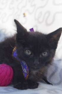 Отдам даром котенок Ёлка, в Новосибирске