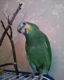 Продам попугая, в Москве