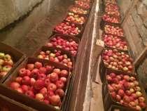 Продаю яблоки зимних сортов (Голден, Семеренко, Антоновка) в, в Нижнем Новгороде