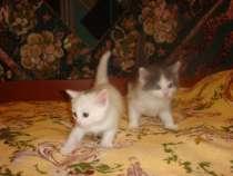 Котята (котики), в Ульяновске