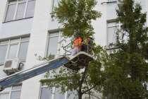 Удаление деревьев, в Электростале