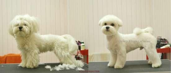 Стрижка собак и кошек в Пушкино Фото 2