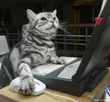 Работа и подработка в интернете