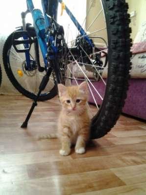 Отдам даром рыжие котята