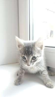 Дарим котят, симпатичные, чистоплотные, самостоятельные в Иркутске Фото 3