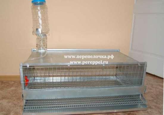 Клетка для содержания перепелов в Екатеринбурге Фото 3