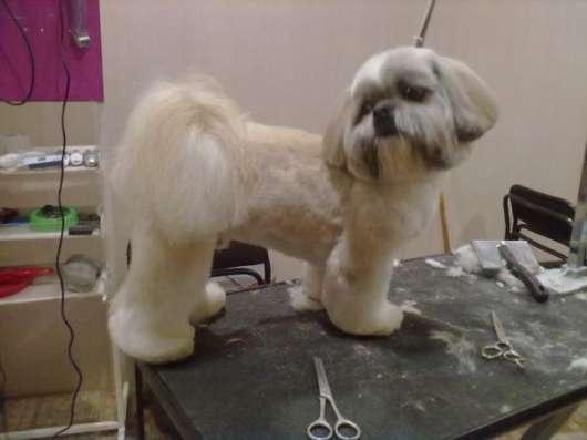 Профессиональная стрижка собак любых пород в Екатеринбурге Фото 4
