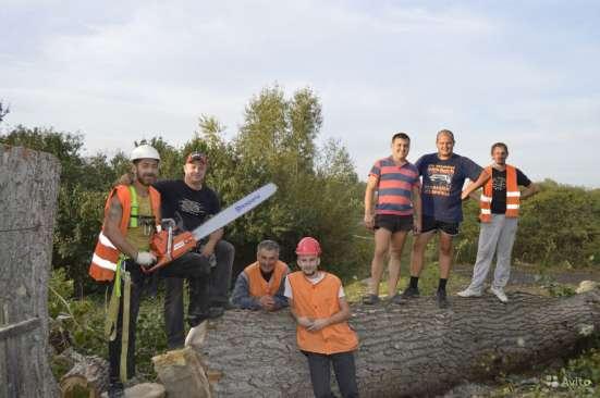 Удаление деревьев в Электростале Фото 4
