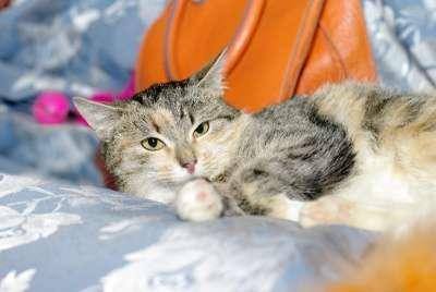 Отдам даром Трехцветный котенок Дусенька в Москве Фото 3