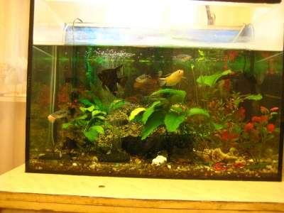 СРОЧНО !!! 2 аквариума действующих в Москве Фото 4