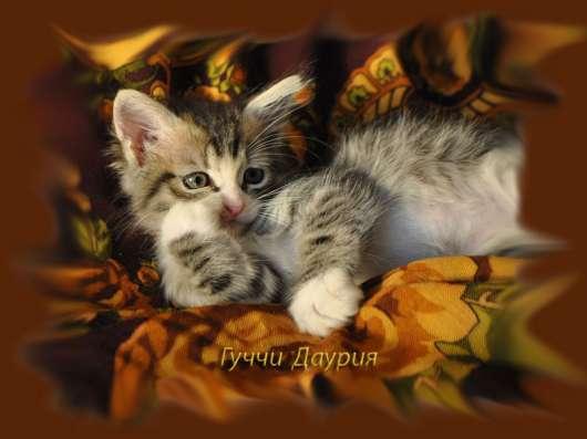 Элитные сибирские котята