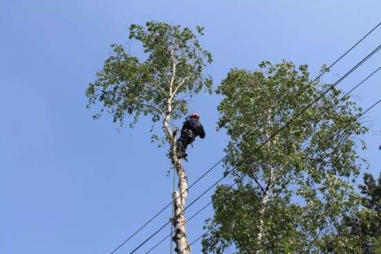 Спилить удалить дерево в Раменском, Раменском районе