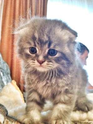 Отдам котят в хорошие руки ❤️ в Воронеже Фото 4