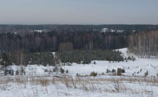 Земельный участок в сосновом бору Элита