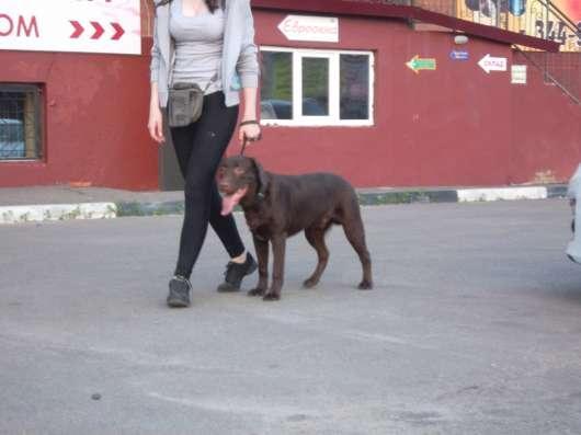 Дрессировка собак в Благовещенске и Белогорске