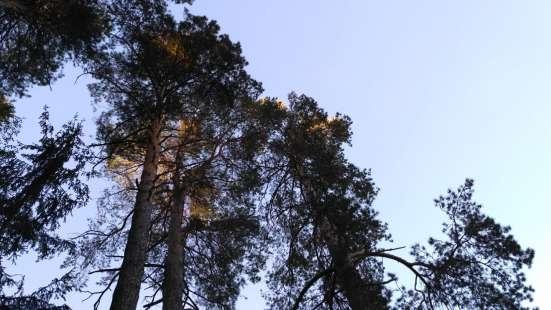 Коттедж 198 кв. м., в Красном бору, рядом с озером и лесом