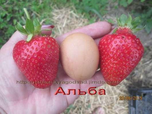 Продам помидоры Черри ассорти