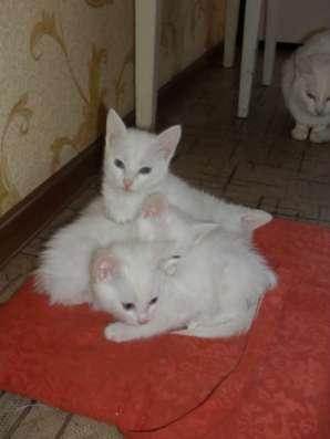 Отдам даром Коты белые, лечебные