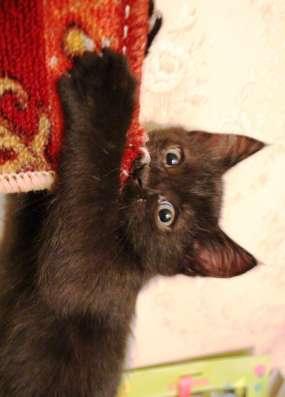 Продам котёнка в Москве Фото 5