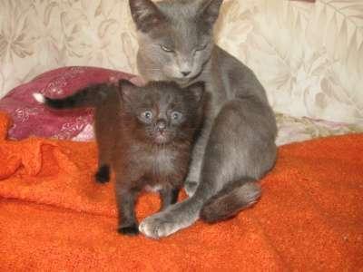 Отдам даром Отдам в добрые и заботливые руки котят