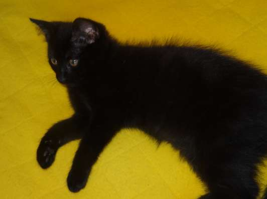Котята в добрые руки в Тюмени Фото 1